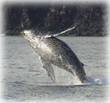 whale research expeditions